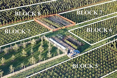 Asack & Son Christmas Tree Farm Ariel Block Layout