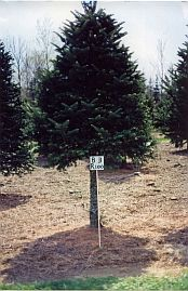 Asack & Son Christmas Tree Farm Block & Row Sign